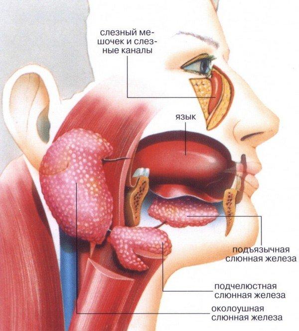Синдром Шегрена — симптомы и лечение