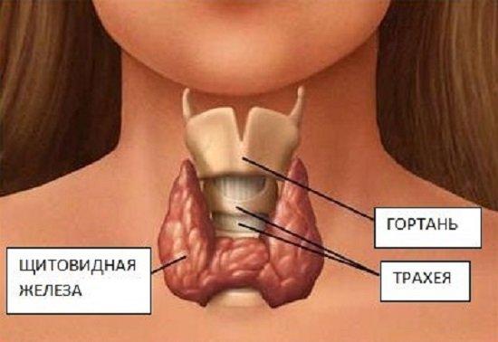 Рак щитовидной железы — симптомы и лечение