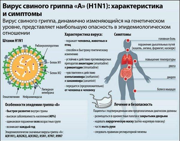 Свиной грипп H1N1 — симптомы и лечение