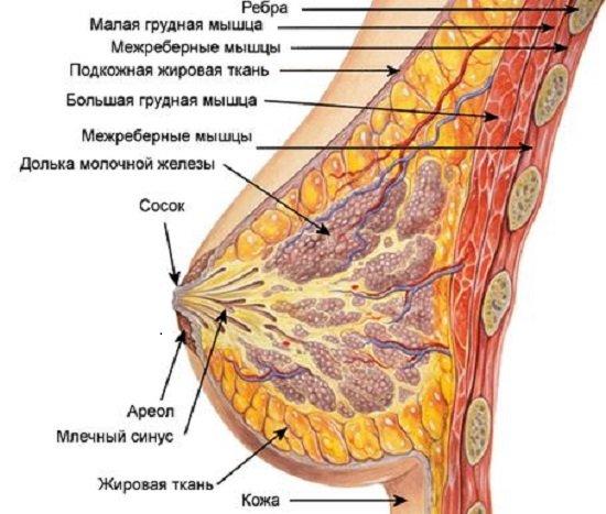 Рак молочной железы — симптомы и лечение