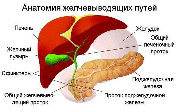 Дискинезия желчного пузыря — симптомы и лечение