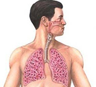 Фиброзирующий альвеолит — симптомы и лечение