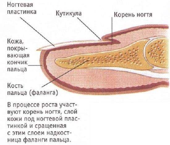 Вросший ноготь — симптомы и лечение