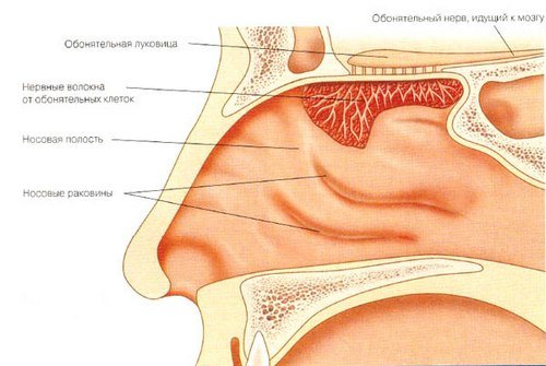 Озена — симптомы и лечение