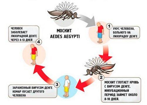 Лихорадка Денге — симптомы и лечение