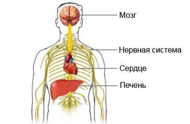 Белая горячка алкогольный делирий — симптомы и лечение