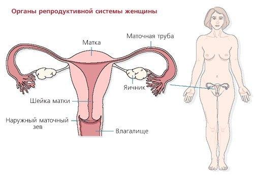 Внематочная беременность — симптомы и лечение