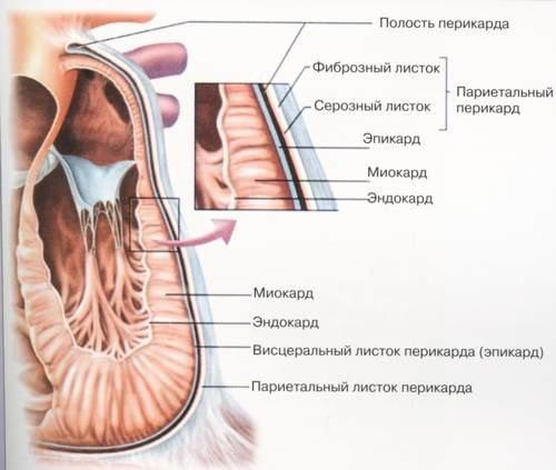 Дистрофия миокарда — симптомы и лечение