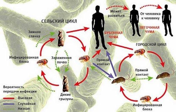 Чума — симптомы и лечение
