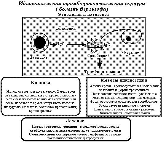 Пурпура тромбоцитопеническая болезнь Верльгофа — симптомы и лечение