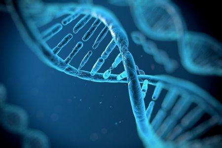 Генетики научились лечить людей до рождения