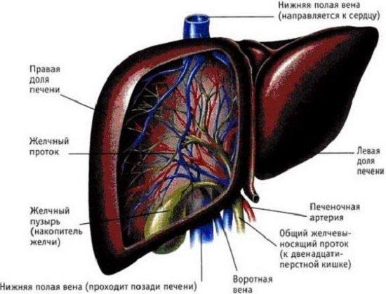 Цирроз печени — симптомы и лечение