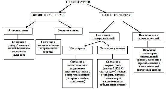 Глюкозурия — симптомы и лечение