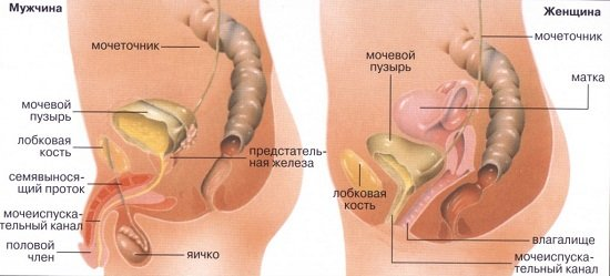 Цистит — симптомы и лечение