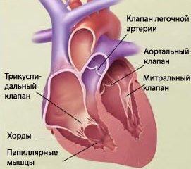 Порок сердца — симптомы и лечение
