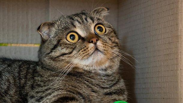 Мурчание кошек продлевает жизнь человека – ученые