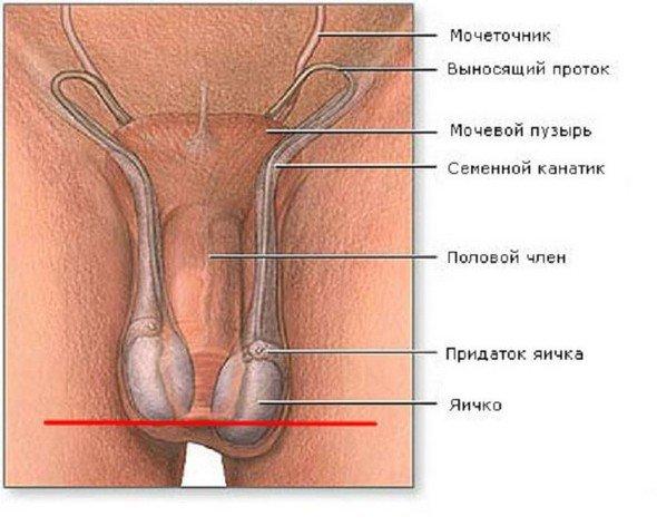 Гипоплазия яичек — симптомы и лечение