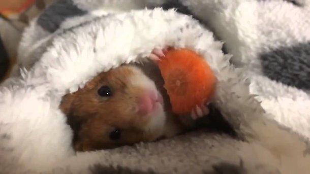 Медики рассказали, кому необходимо налегать на морковь