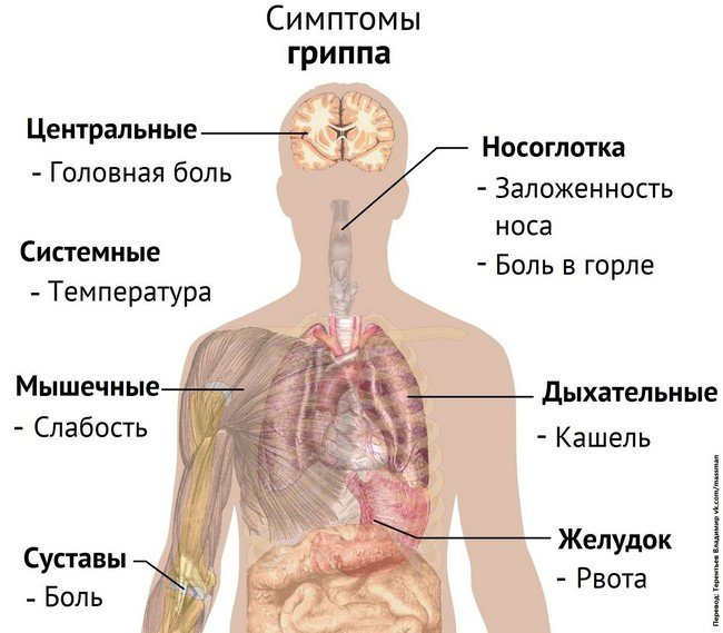 ОРВИ — симптомы и лечение