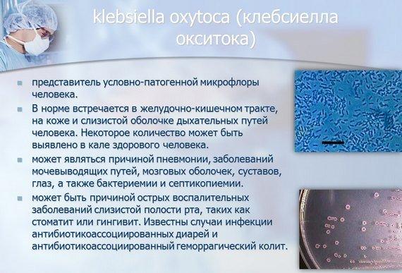 Клебсиелла – симптомы и лечение, фото и видео