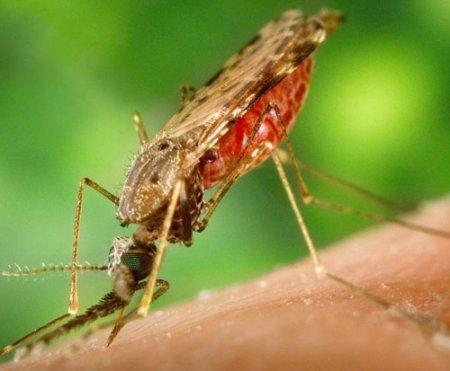 На север Италии умерла от загадочной малярии 4-летняя девочка