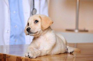 Собачья инфекция кампилобактериоз в США поразила полсотни человек