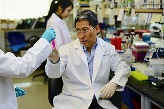 Регенерация сосудов поможет лечить нарушения кровообращения