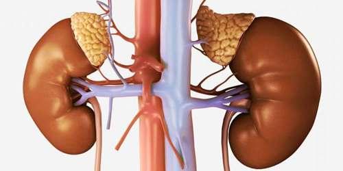 Аденома надпочечника – симптомы и лечение, фото и видео.