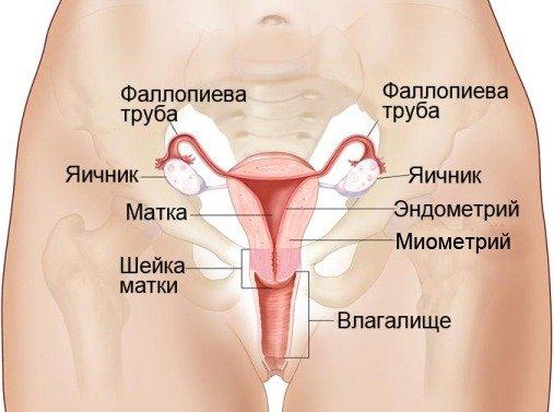 Рак матки – симптомы и лечение, фото и видео.