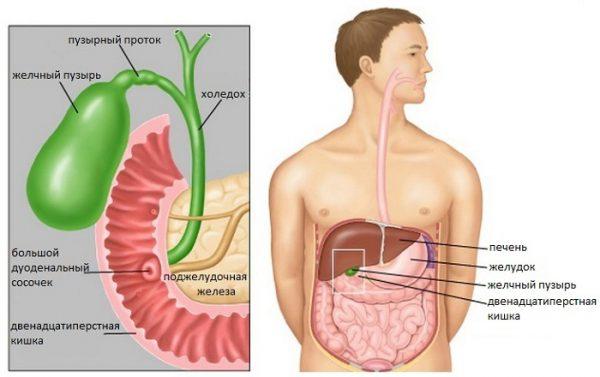Дисфункция билиарного тракта – симптомы и лечение, фото и видео.