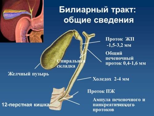 Дисфункция билиарного тракта – симптомы и лечение