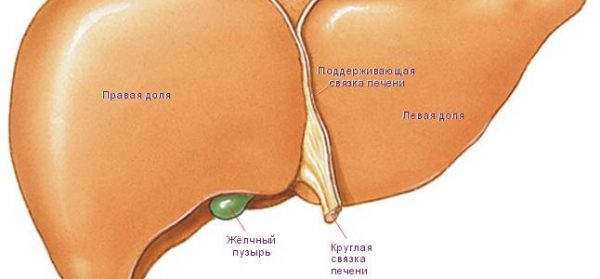 Диффузные изменения печени – симптомы и лечение, фото и видео.