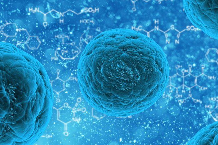 Клетки кожи вылечат рассеянный склероз