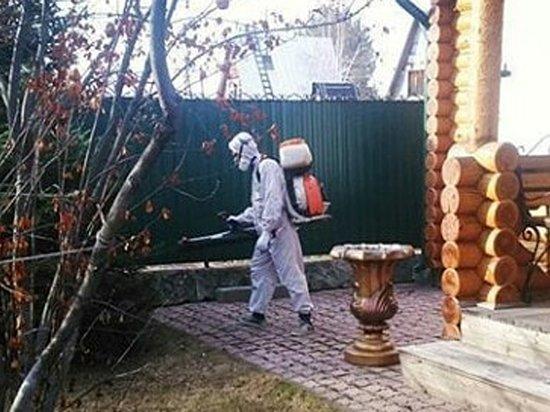 В Москве активизировались клещи, уже 12 укусов