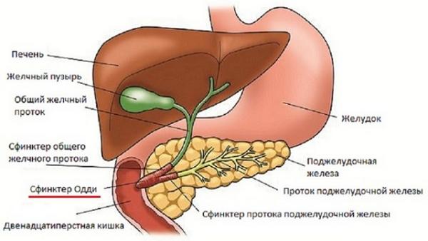 Дисфункция сфинктера Одди – симптомы и лечение, фото и видео