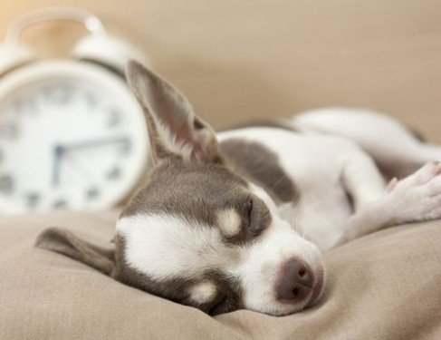 Отсыпаясь на выходных, мы избегаем ранней смерти