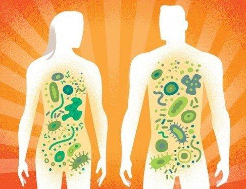 «Давайте поразвлекаем свою микробиоту»
