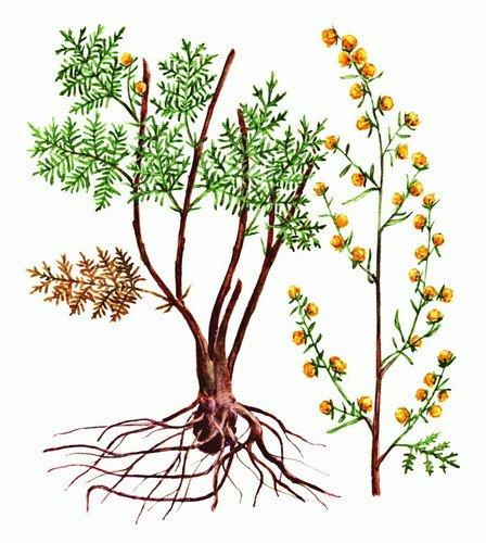 Полыни горькой трава — инструкция по применению, цена