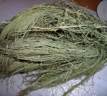 Хвоща полевого трава — инструкция по применению, цена