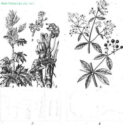 Настой сенны сложный — инструкция по применению, цена