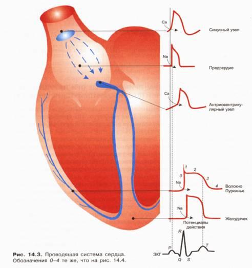 Мепросцилларин — инструкция по применению, цена