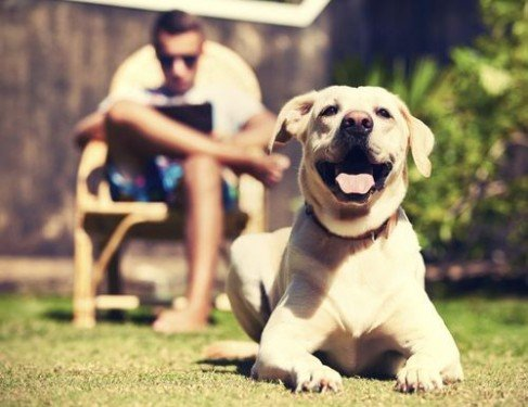 Как собаки улучшают наше здоровье