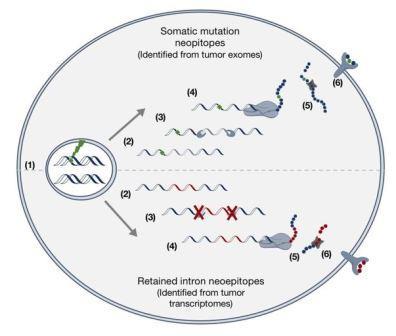 Открыт новый класс молекул, который поможет ускорить разработку вакцины от рака