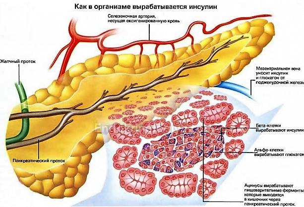 Гиперинсулинизм — симптомы и лечение, фото и видео