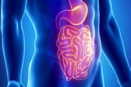 Какие продукты помогут очистить кишечник?