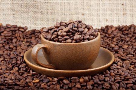 Обжаренные кофейные зерна защищают мозг и нервную систему