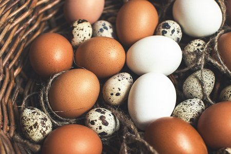 Яйца защищают женщин от рака