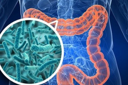 Кишечные бактерии могут быть виновны в развитии диабета