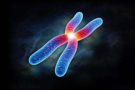 Продолжительность жизни связана с хромосомами