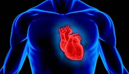 Электрические сети в сердце оказались самоорганизующимися